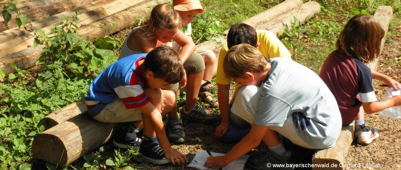 Bayerischer Wald Kinderurlaub am Bauernhof in Bayern Spaß und Fun für Kids