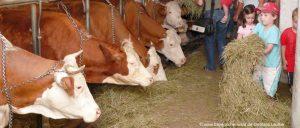 Bayerischer Wald Bauernhofurlaub für Familien mit Kinder