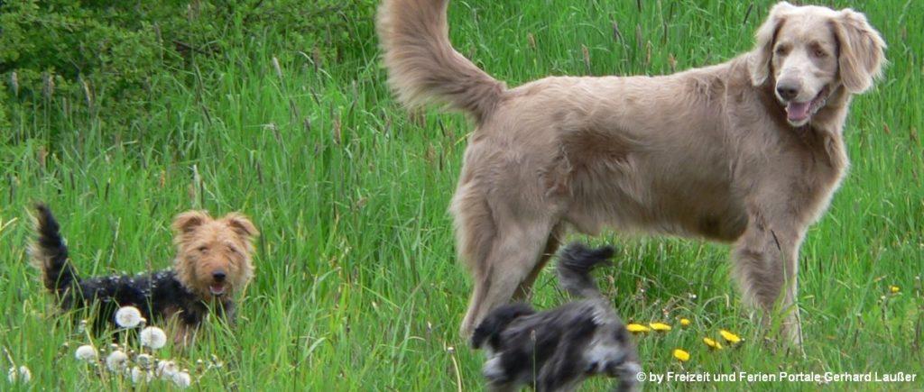 Hotels im Bayerischen Wald mit Hunde erlaubt und willkommen sind