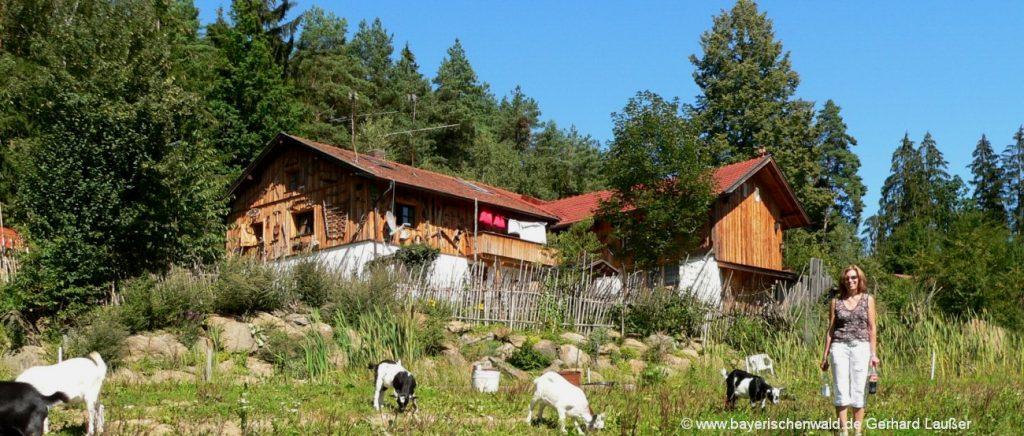 Berghütten Bayerischer Wald Ferienhütten und Blockhaus Urlaub