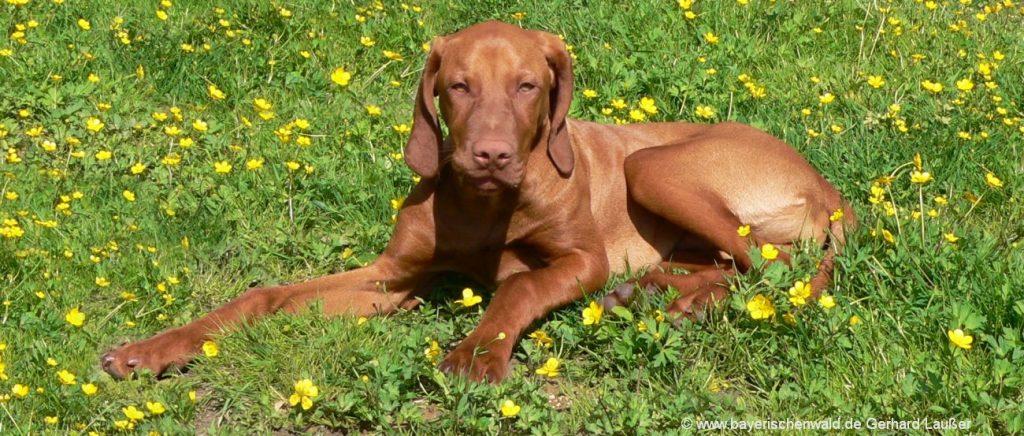 Gasthof Bayerischer Wald mit Hund erlaubt