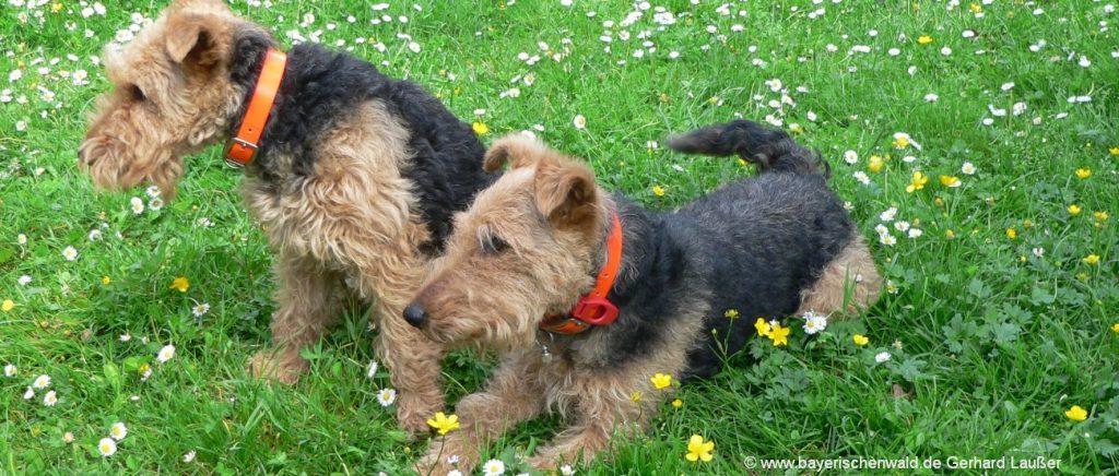 Bayerischer Wald Urlaub mit Hund und Haustier
