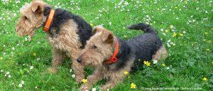 Bayerischer Wald Urlaub mit Hund – Hundefreundliche Unterkünfte