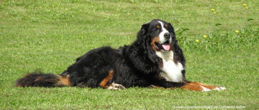 Bayerischer Wald Pensionen mit Hund